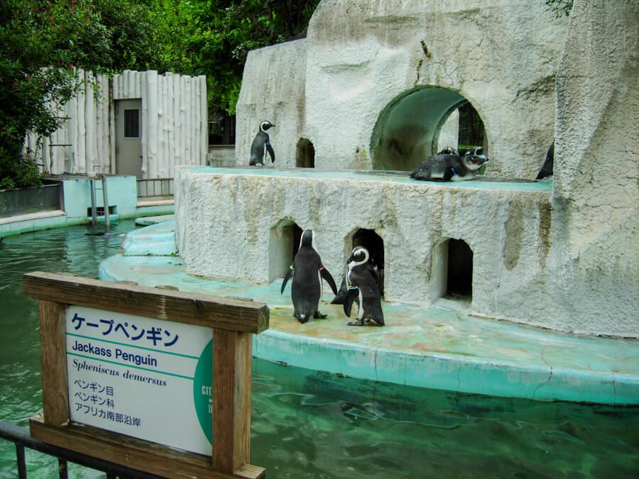 Ueno Zoo Tokyo Japan | The Travel Tester