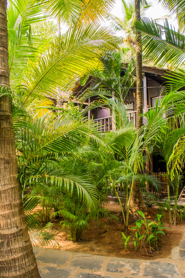 Places to See in Goa: Find Your Inner Hippie with These Peaceful Activities || The Travel Tester