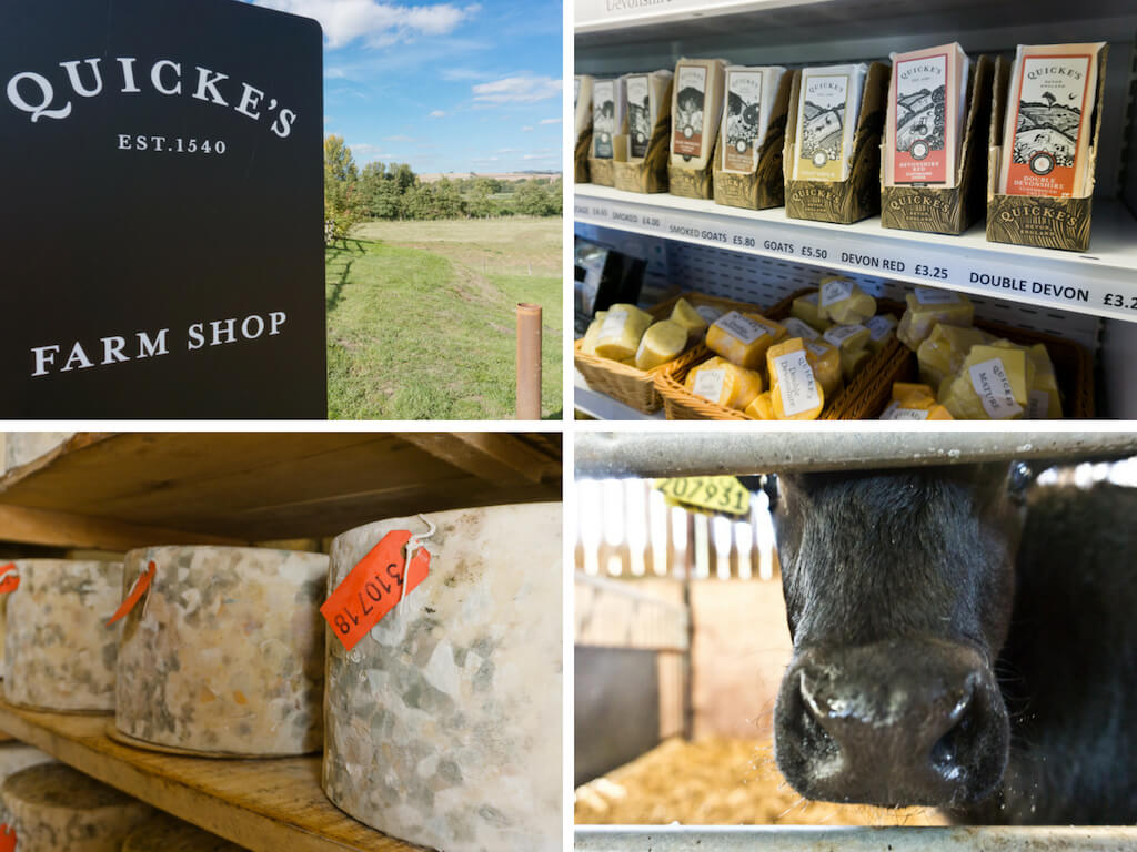 One Day in Exeter, England? Complete Guide to a Perfect City Break!    The Travel Tester    #Exeter #England #GreatBritain #Devon #CityBreak #Travel #Farm #Cheese