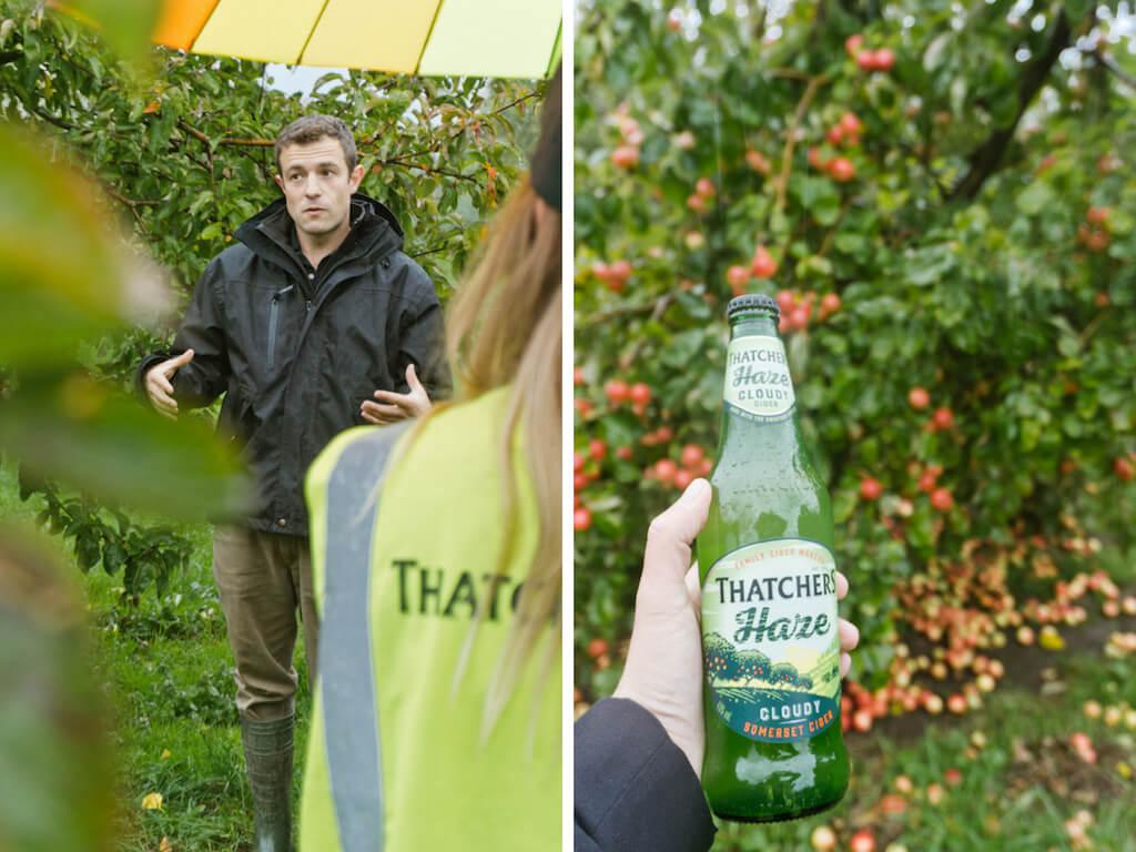 Join a Behind-The-Scenes Thatchers Cider Tour in England    The Travel Tester    #Cider #Thatchers #Orchard #England #Somerset #MyrtleFarm #UnitedKingdom #UK
