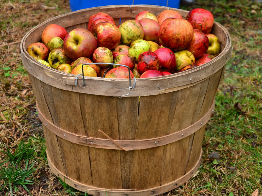What is Cider? (And why are not many people drinking this yet in The Netherlands?) || The Travel Tester