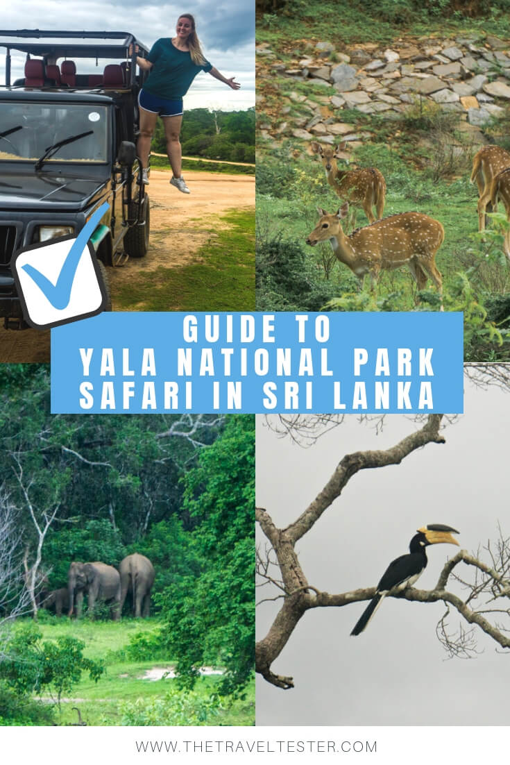 What You Need to Know About The Yala National Park Safari    The Travel Tester    #SriLanka #Asia #Travel #Yala #YalaNationalPark #Cinnamon #Hotel #Safari