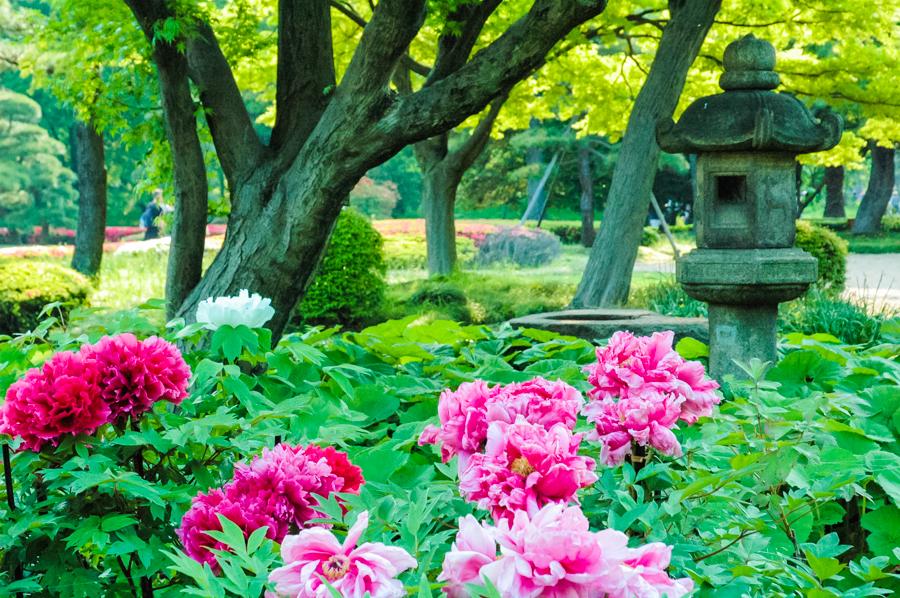 Places to Visit in Tokyo: Marunouchi Neighbourhood Tokyo, Japan || The Travel Tester